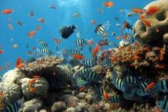Red-Sea-underwater-coral-reef
