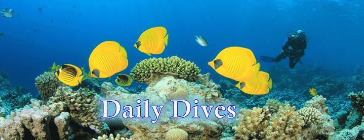 daily scuba dives