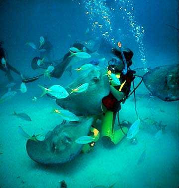 snorkel st thomas