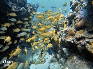 St Thomas discover scuba dive